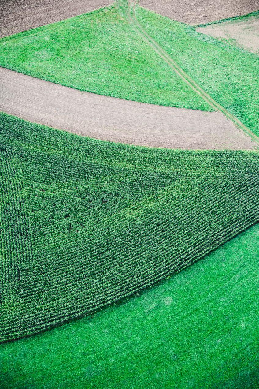 Imagem ilustrativa para Cuidados na recomendação do uso de agrotóxicos causam impactos na produção de alimentos seguros